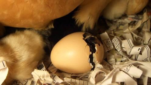 先有男人还是先有女人,先有鸡还是先有蛋?千古难题终于有了答案