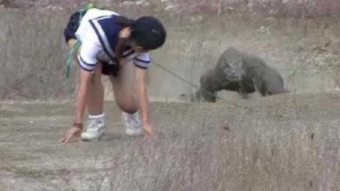 日本美女腰间绑生肉,挑衅科莫多巨蜥,不料下一秒意外发生了!
