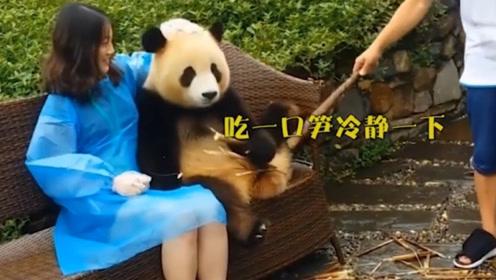 """""""好色""""的大熊猫,看见美女就动手动脚,看见男生就面无表情!"""