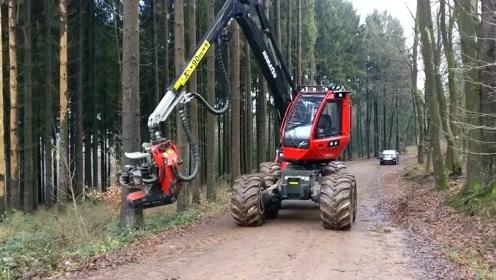 这国外的机械业真的是很发达,这么大一棵树就几秒搞定