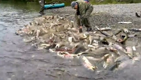 三文鱼在我们这里吃不起,在国外随便一网就抓了一大堆
