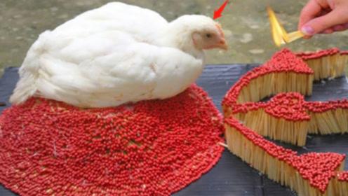 烤鸡打开的正确方式?老外用10000根火柴烤鸡,结果让人惊喜!