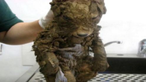"""本以为在泥坑捡到了一条""""傻狗"""",洗干净后,女子被吓了一跳"""