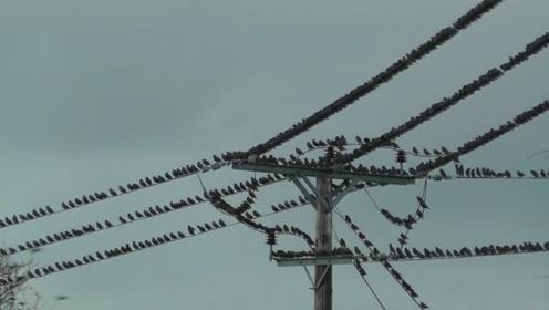 一群鸟在高压线上休息,起飞时高压线直接爆炸,镜头拍到意外瞬间