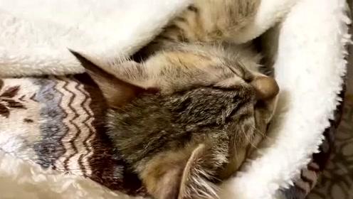 乐生活:小花猫在被窝里玩耍,真可爱