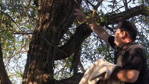 男子发现树上挂着异物,好心收养数月后,像整容了一般