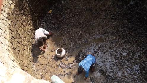 废井里传来奇怪的响声,村民抽干水后一看,地上密密麻麻的一片