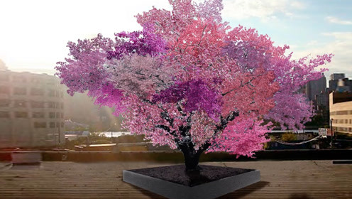 世界上最牛的果树嫁接,一棵母树能结出40多种水果,四季不停!