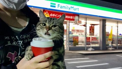 乐生活:小花猫和主人去超市