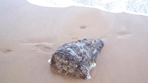 """女子海边发现""""怪异""""石头,凑近一看,瞬间傻眼了!"""