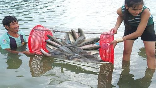 用水管做的自动化捕鱼机,肥鱼靠近自觉钻入,躺着就能大丰收!