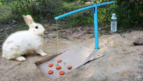大叔教你制作捕兔陷阱!