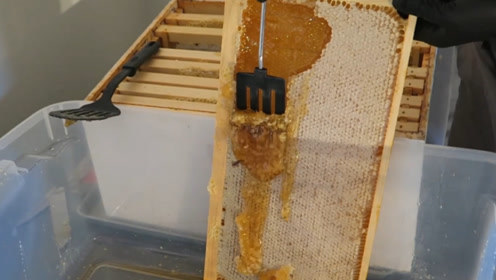 小哥处理蜂蜜,将蜂巢表面的蜂蜡刮掉,蜂蜜直往外涌,看得人过瘾