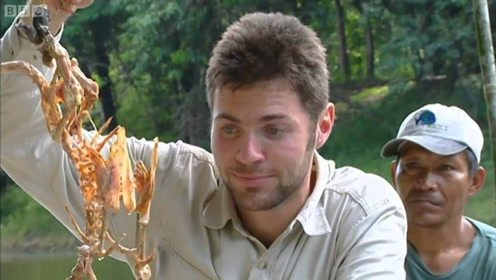 食人鱼吃肉常见,拿老外把食人鱼两面炸至金黄,能吃吗?
