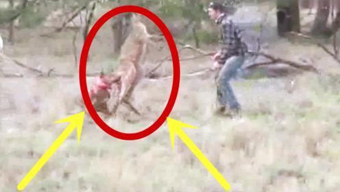 男子发现袋鼠在欺负狗子,过去就给它一拳,袋鼠一脸无辜愣住了!