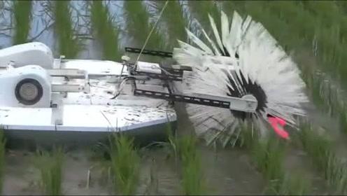 农村大学生自己研制的水稻除草器,看着挺高大上,不知道管不管用
