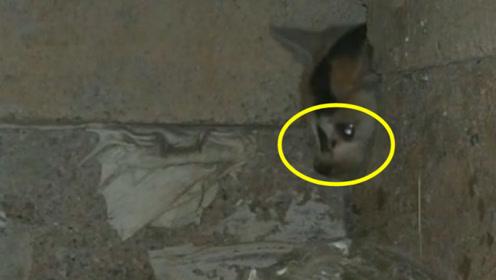 流浪小猫对人类充满畏惧,躲在墙缝中生活,看完心疼的流泪