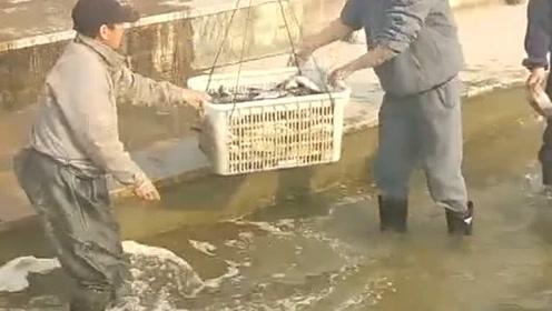 养殖场又开始作业了,连续每年投放不同品种的鱼苗,打算养好全国的海鲜!