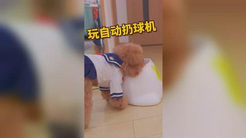 狗狗玩自动扔球机,没想到它的花样这么多!