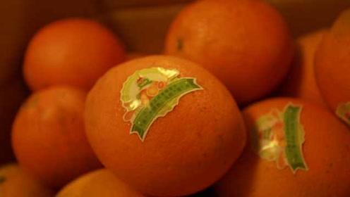 高校为考研学子发1200个脐橙:预祝旗开得胜,马到成功!