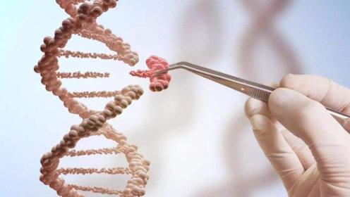 人类在600万年前丢失一对染色体,到底是谁做的?