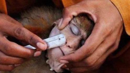 主人无聊给猴子剃毛,剃完后的样子,让人看了不淡定