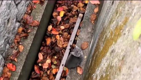 被困下水道的小猫咪,在好心路人的坚持投喂下,终于活了下来