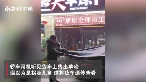 湖南益阳一货车运活羊被逼停:羊叫声像孩童哭声,被误会拐卖儿童