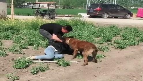女主人菜地干活昏倒,狗狗举动感动我了,为懂事的狗狗鼓掌!