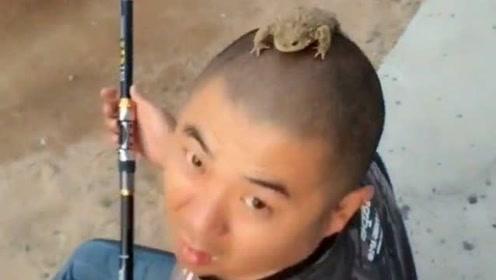这是人干的事吗,把青蛙放在了大哥头上,网友:真是太吓人了吧!