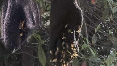浙江一高校女生用果香味沐浴露洗袜子,晾晒招来一群蜜蜂