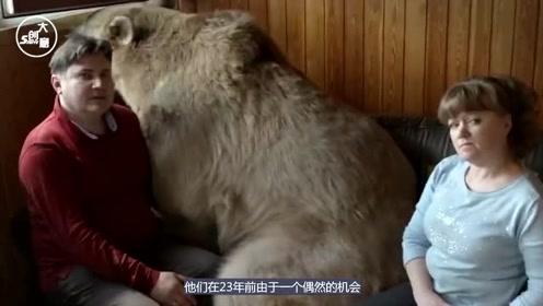 """俄罗斯夫妇捡了只小棕熊,放在家里养23年,已经没有一点""""熊样"""""""