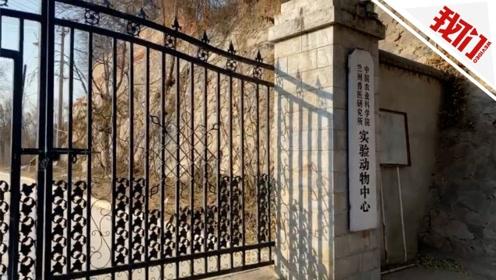 中国农科院兰兽研96人布病隐性感染 患病学生:多层防护仍染上病