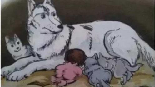 狼遇到人类婴儿,为什么会养大而不是吃掉?看完解开多年疑惑