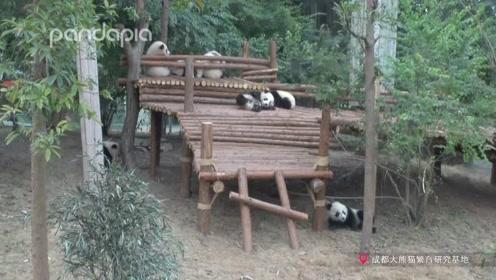 熊猫写日记 You jump!I jump!