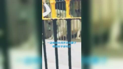 饲养员投喂狮子被一口咬住手臂 痛苦尖叫时游客的举动亮了