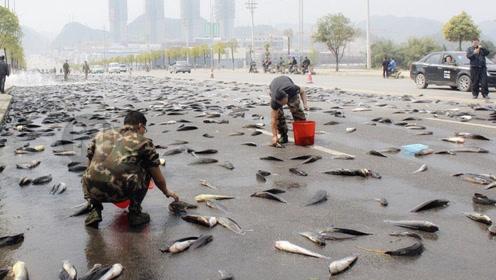 天空中下活鱼不再稀奇,俄罗斯下起了钱雨,网友:羡慕呀!