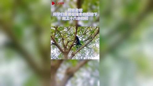 羡慕吗?四川大学开设攀树课 课程火爆几百人抢课