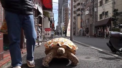 """日本象龟离家出走,动物园马上发布""""悬赏令"""",象龟:我开始慌了"""