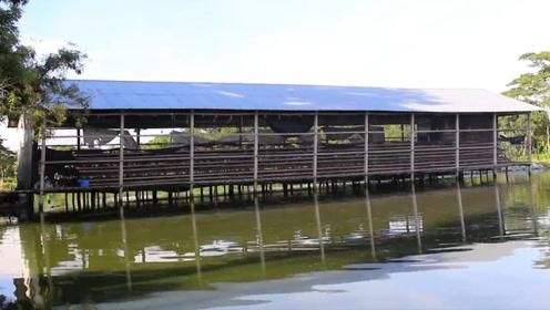 印度大爷又开挂,把养鸡场建在鱼塘上,一年多赚十多万!