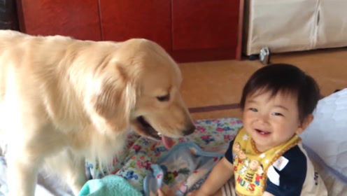 金毛陪孩子玩耍,孩子被狗子逗得哈哈大笑,网友:神仙组合呀