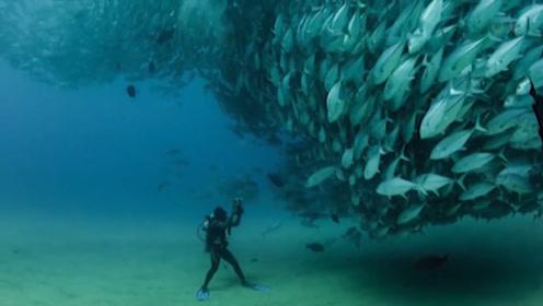 海洋中最大的鱼群,规模是如此之大,鱼群在海中形成了龙卷风!