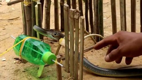 农村小伙用塑料瓶做陷阱,大毒蛇不小心钻进去,变成蛇肉羹!