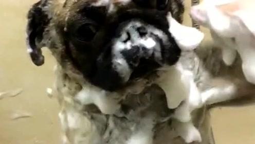 这用这种方式给狗狗洗澡不感觉很过分吗,网友:单身狗就是专业!