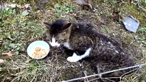 野猫救援,身体被困却仍不忘吃的吃货猫