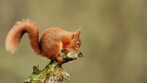 游客听到异常的叫声,拯救了一只被挂在树枝上的小松鼠