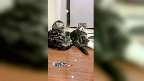 作为一只猫最重要的是什么,我来告诉你