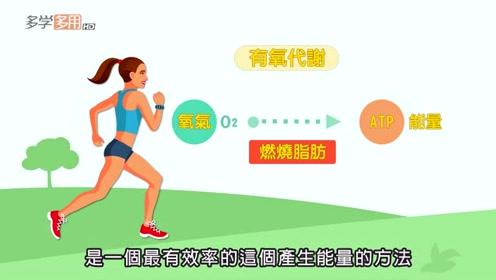 有氧运动会消耗肌肉吗?