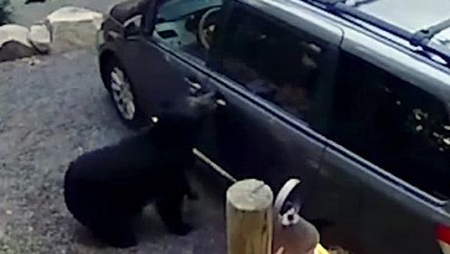 """熊妈带着熊宝宝喜提新车!结果太""""丢熊了"""""""