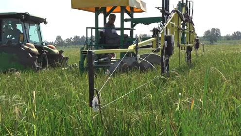 用线除草你见过?13米新型除草机,全程除草只靠金属线!